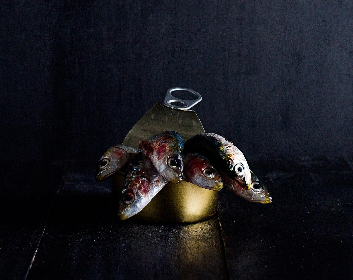 sardinas-en-lata-conserva-elfotogastro