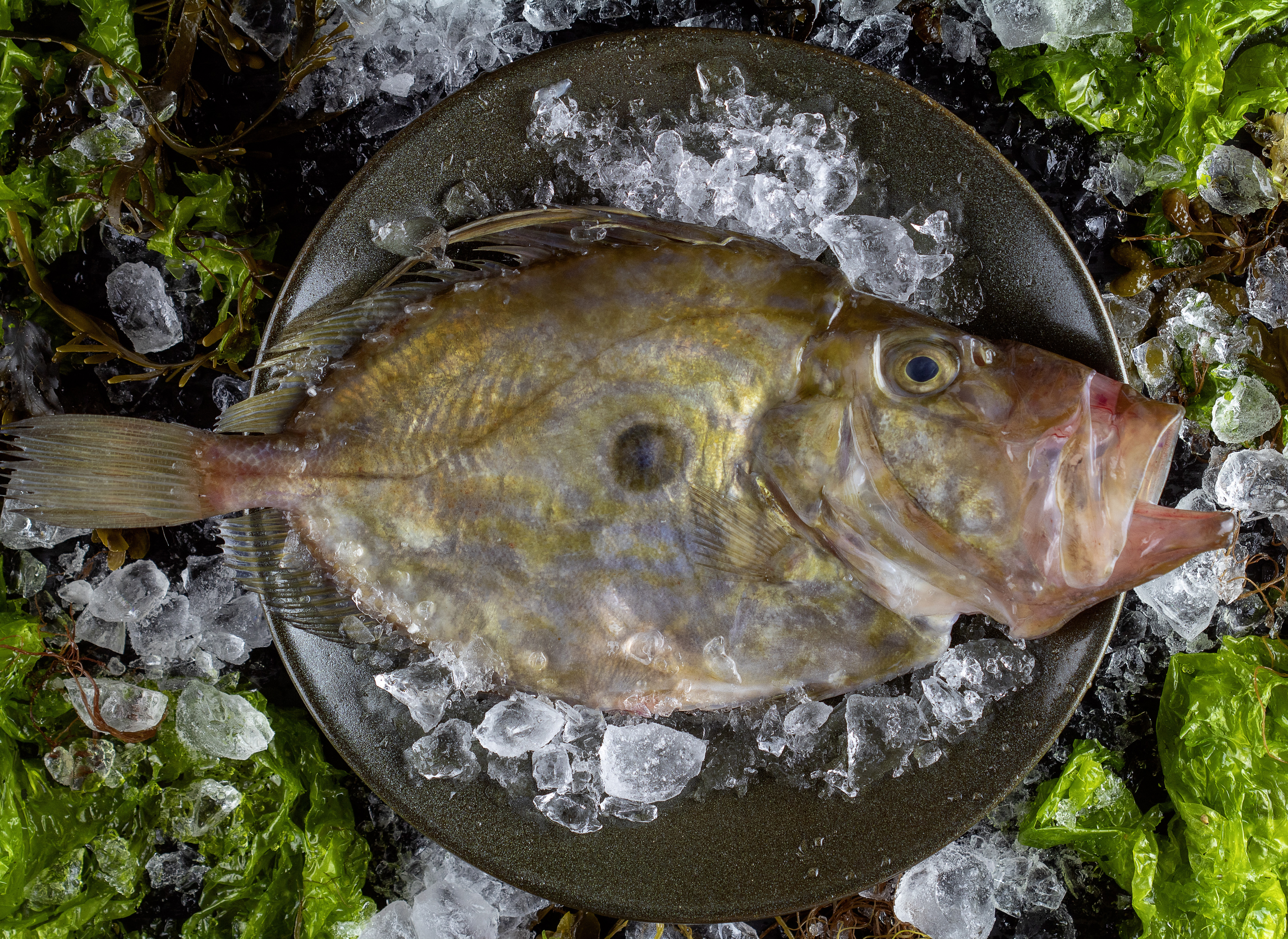 estilismo culinario en la fotografía de producto